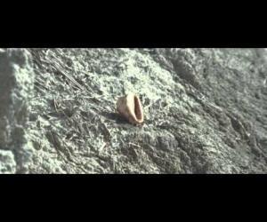 Mishima - L'última ressaca