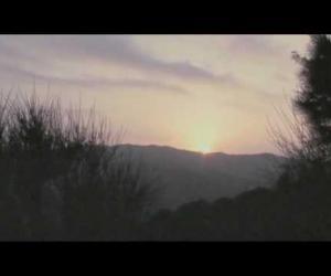 Anímic - Kent Forest